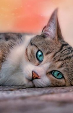 Mancare si Accesorii pentru Pisici