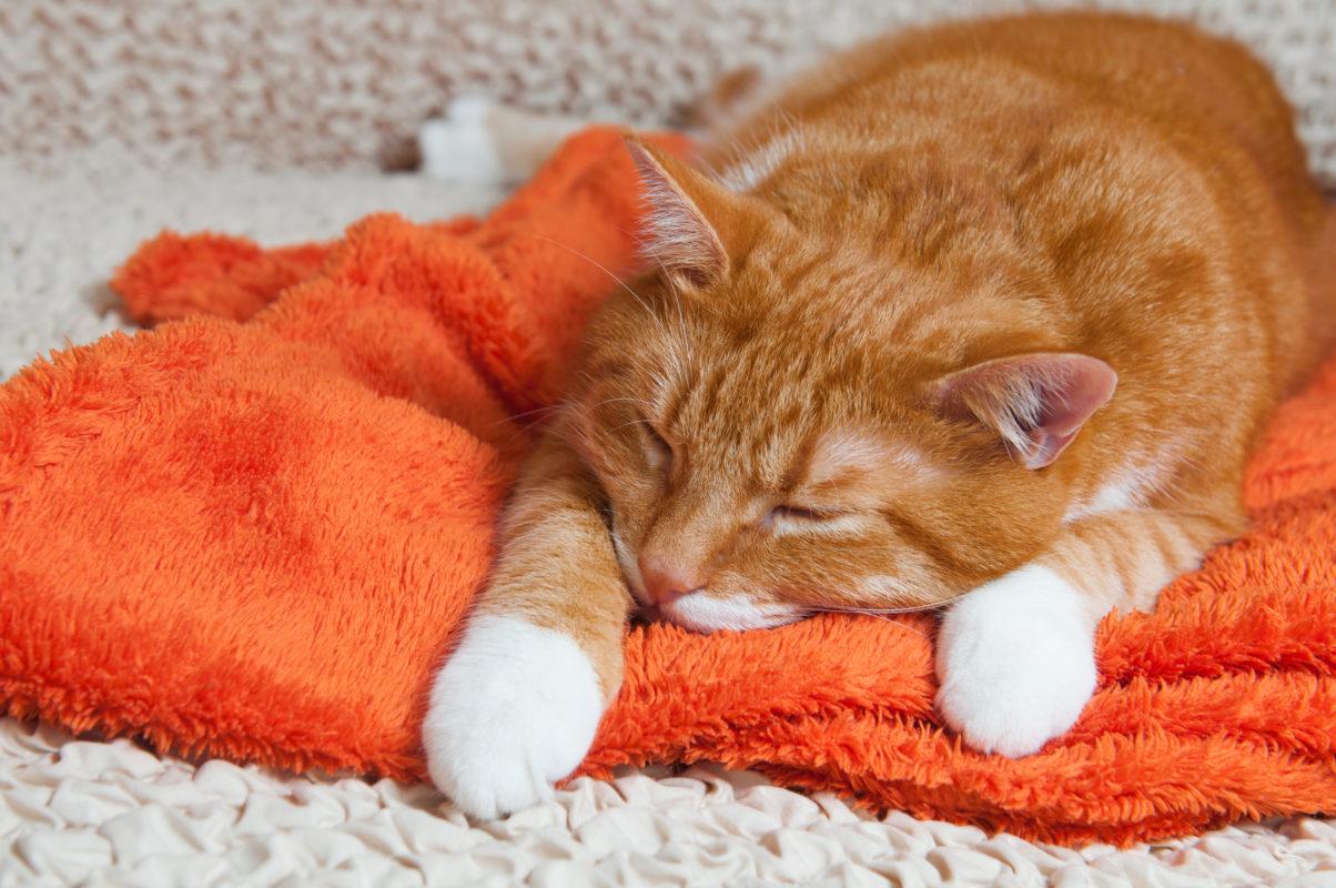 tipuri de diaree la pisici