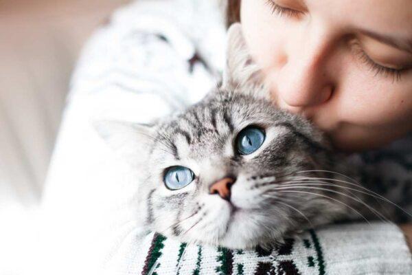 Nastere pisica