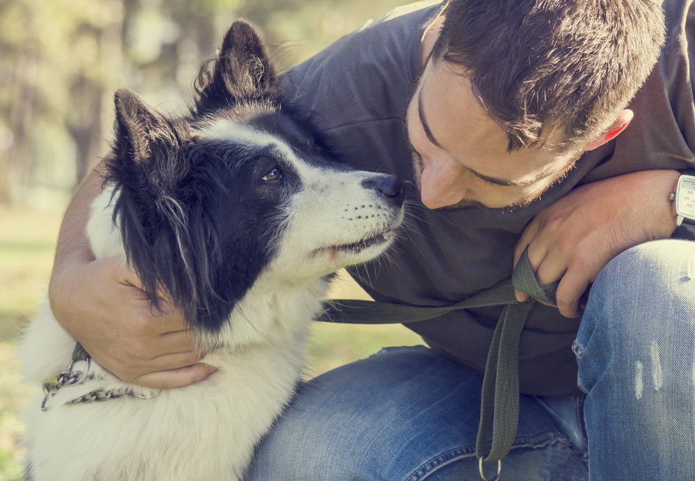 Tratament pentru cistita la caini - eusuntmic.ro